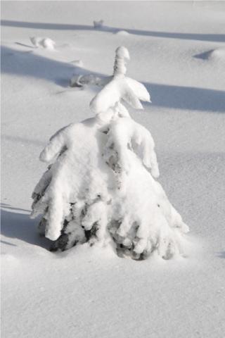 Weihnachtsbaum Next Generation