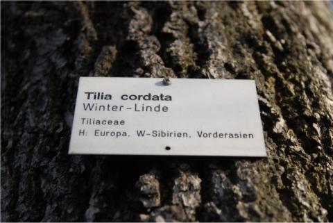 Baum mit Namen