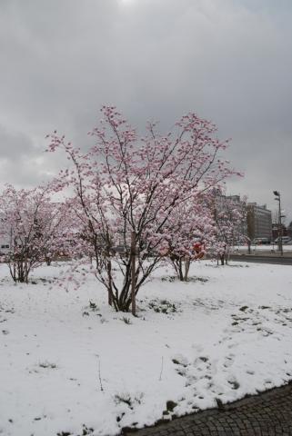 Osterblüten original