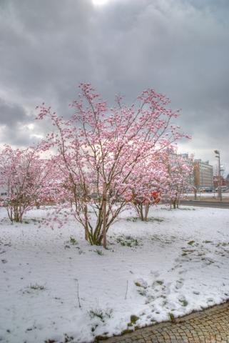 Osterblüten HDR